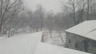 Friday, 1/22: Snowy woods behind our place.